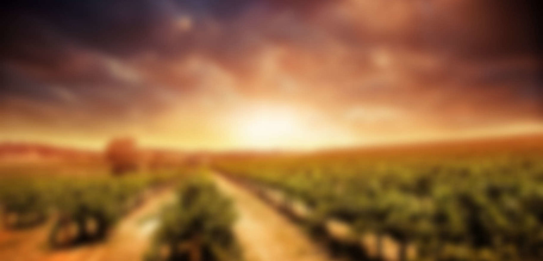 Wine Vintages and Why They Matter