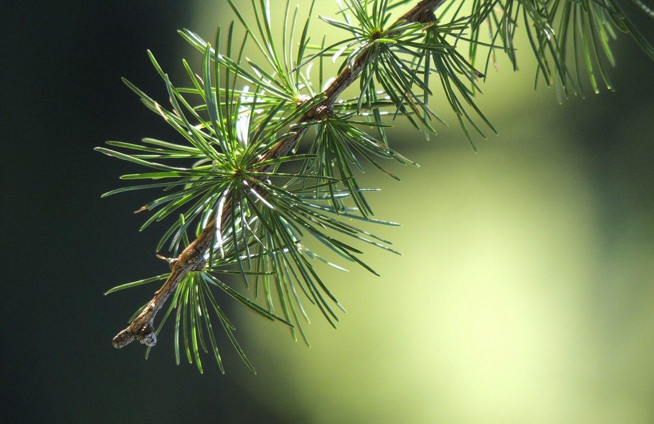 Leśne eliksiry zapachowe- Gotowy przepis na naturalny zapach