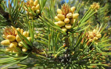 Zapach lasu do domu. Aromaterapia  kiedy tylko chcesz !