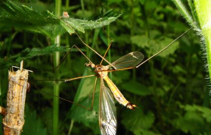 Skuteczność środków na komary-jak stosować aby działały?
